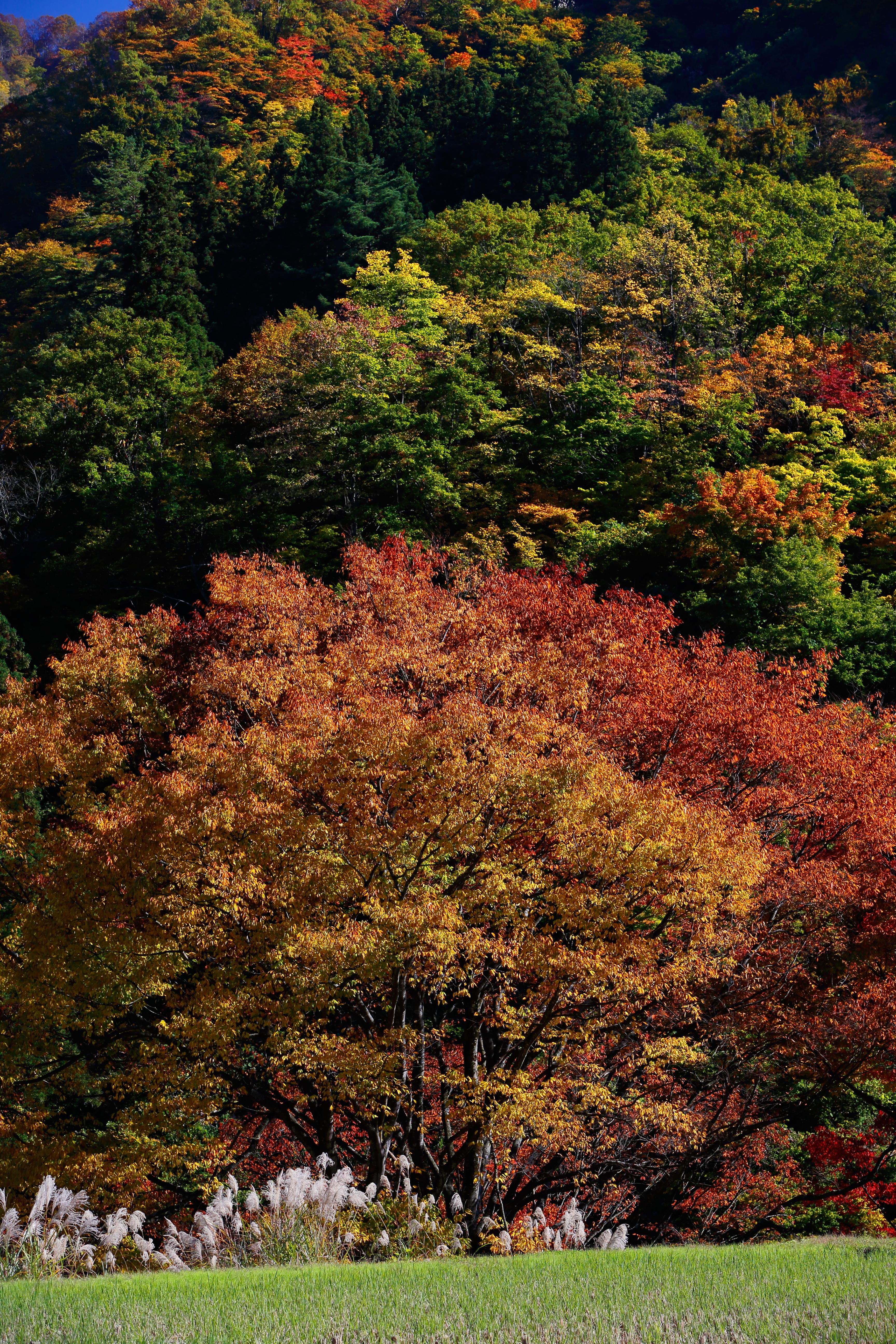 http://www.art-photo.jp/blog/archives/images/2014.10.31/1DX03263.jpg